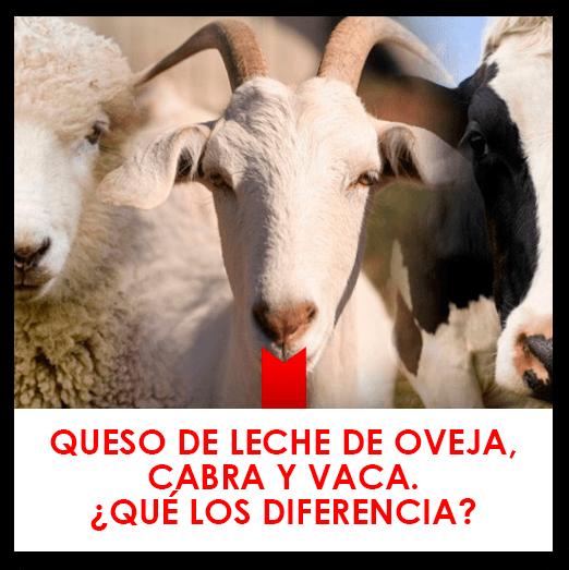 Queso de leche de oveja, cabra o vaca
